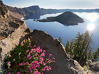 Penstemon growing on edge of Crater Lake. Crater Lake National Park, Oregon