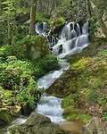 Spring greenery surrounds a waterfall in the Tremont area of the Great Smoky Mountains national Park. Three exposure HDR by Jan Brugman.