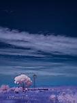 Windmill and Cottonwood, near Dos Cabezas, Arizona (Infrared)