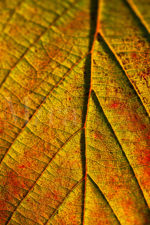 Autumn leaf detail.