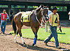 RC's Daisyduke before The White Clay Creek Stakes at Delaware Park on 7/29/15