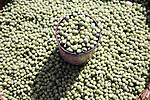 A can full of peas at the Analakely market in Antananarivo in Madagascar