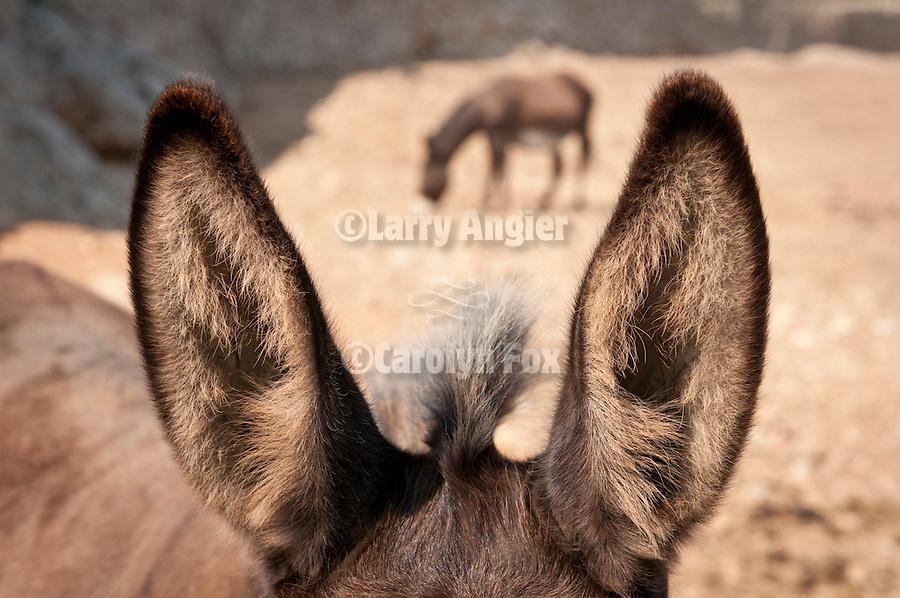 Donkey ears, Folegandros, Cyclades, Greece