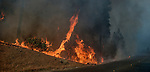 September 3, 1987 Buck Meadows, California -- Stanislaus Complex Fire -- Active fire coming up from the Tuolumne River canyon threatens to jump Highway 120 near Rim of the World overlook. The Stanislaus Complex Fire consumed 28 structures and 145,980 acres.  One US Forest Service firefighter, David Ross Erickson, died from a tree-felling accident.