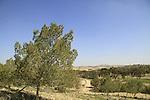 Israel, Shephelah, Pine trees in Dudaim forest