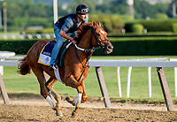 ELMONT, NY - JUNE 08: Hofburg gallops around the track as horses prepare on Friday for the 150th running of the Belmont Stakes at Belmont Park on June 8, 2018 in Elmont, New York. (Photo by Scott Serio/Eclipse Sportswire/Getty Images)