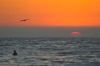 Swimming With The Seagull At Sunset