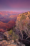 Evening light over the Grand Canyon from Hopi Point, South Rim, Grand Canyon National Park, ARIZONA