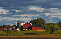 The sun sets on the Yarnell Family Farm barns in Westerville, Ohio.Illustration from photograph.  Photo Copyright Gary Gardiner.