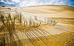 Shadows lengthen on golden dunes of sand alongside the Te Paki stream..This New Zealand Fine Art Landscape Print, available in four sizes on either archival Hahnemuhle Fine Art Pearl paper or canvas, is printed using Epson K3 Ultrachrome inks and comes with a lifetime guarantee against fading..All prints are signed and numbered on the lower margin and come with my 100% money back guarantee on the purchase price, should you not be  completely happy with the quality of the delivered print or canvas.