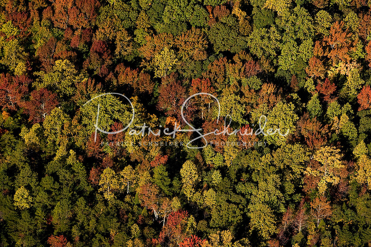 Aerial view of Charlotte's autumn color.