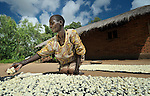 A woman breaks up soaked cassava and lays it in the sun to dry in Karonga, an area in northern Malawi which has been hit hard by drought and hunger.