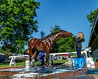 LOUISVILLE, KENTUCKY - MAY 01: Battle of Midway, owned by Fox Hill Farms, Inc. and trained by Jerry Hollendorfer, gets a bath after exercising in preparation for the Kentucky Derby   at Churchill Downs on May 1, 2017 in Louisville, Kentucky. (Photo by Jesse Caris/Eclipse Sportswire/Getty Images)
