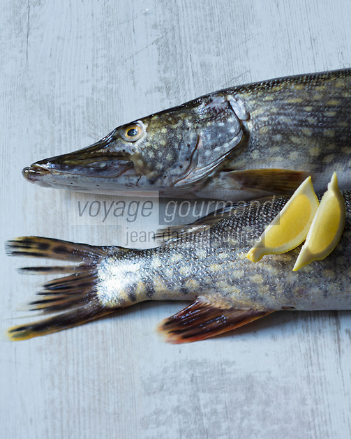 Grand brochet / Northern pike - Stylisme : Valérie LHOMME