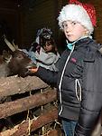 Anna Ekuse feeds a goat  at the Live Crib at Ballsgrove church. Photo: Colin Bell/pressphotos.ie