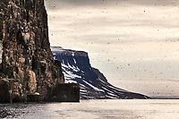 Birds on the cliffs of Alkefjellet, Svalbard