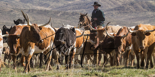 Long ones Cowboys working and playing. Cowboy Cowboy Photo Cowboy, Cowboy and Cowgirl photographs of western ranches working with horses and cattle by western cowboy photographer Jess Lee. Photographing ranches big and small in Wyoming,Montana,Idaho,Oregon,Colorado,Nevada,Arizona,Utah,New Mexico.