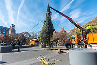 New York, NY- The Annual Christmas tree arrived in Washington Square Park Monday morning. The tree, which has stood under the arch each Christmas since 1924, was relocated due the four month long Ai Weiwei installation. The Washington Square Christmas Tree Lighting is the oldest in New York City and predates the Rockefeller Tree Lighting by several years. ©Stacy Walsh Rosenstock