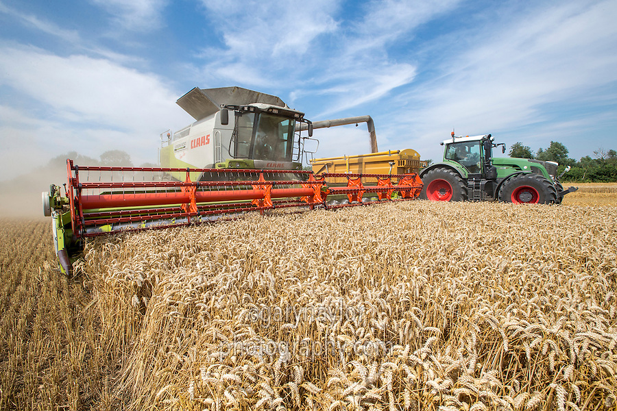 Harvesting wheat with a Claas Lexion 600TT - Cambridgeshire, July