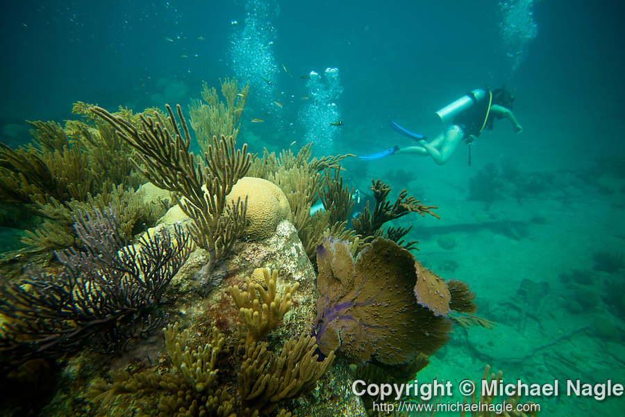 BERMUDA -- SEPTEMBER 12, 2009:  A diver swims a coral covered steam boiler of the Montana, which sank in December of 1863, while on a dive with Bluewater Divers & Watersports, on September 12, 2009 in Bermuda.  (PHOTOGRAPH BY MICHAEL NAGLE)