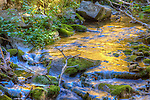 Fall aspen colors are reflected on the surface of Indian Creek in the Abajo Mountains near Monticello, Utah.