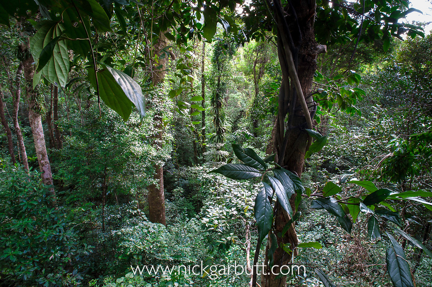 Lowland rain forest viewed from the canopy. Masoala National Park, north eastern Madagascar.