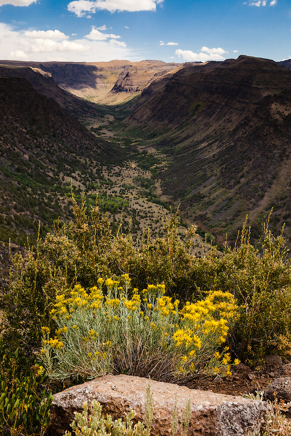 Yellow wildflowers bloom near a large stone along a ridgeline near Steens Mountain in Southeast Oregon on a bright sunny day.