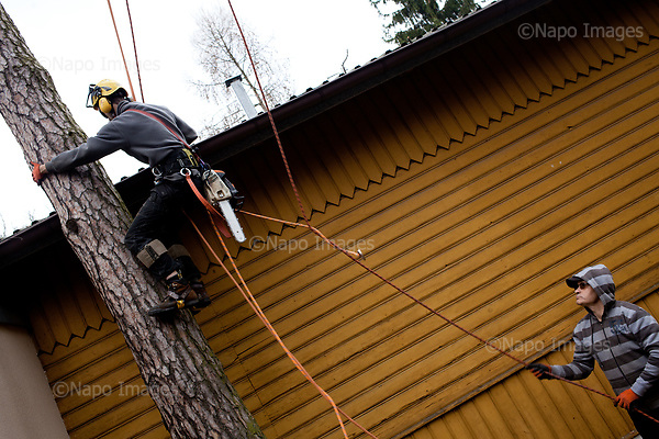 OTWOCK, POLAND, 15/03/2017:<br /> Grzegorz and Andrzej are preparing to cut the tree in a small town of Otwock near Warsaw, March 15, 2017. The new controversial law has allowed to cut the trees that were previously banned and there's been a sure in cutting trees all over the country. <br /> (Photo by Piotr Malecki / Napo Images)<br /> ****<br /> OTWOCK,  15/03/2017:<br /> Wycinka dwoch drzew na prywatnej dzialce w Otwocku po wprowadzeniu przez ministra srodowiska Jana Szyszke prawa o swobodym wycinaniu drzew.Fot: Piotr Malecki / Napo Images
