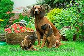 Marek, ANIMALS, REALISTISCHE TIERE, ANIMALES REALISTICOS, dogs, photos+++++,PLMP3139,#a#, EVERYDAY