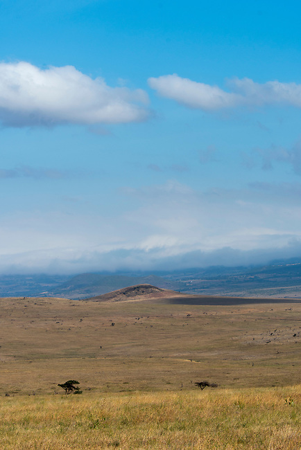 View of the grasslands in the Lewa Wildlife Conservancy in Kenya.