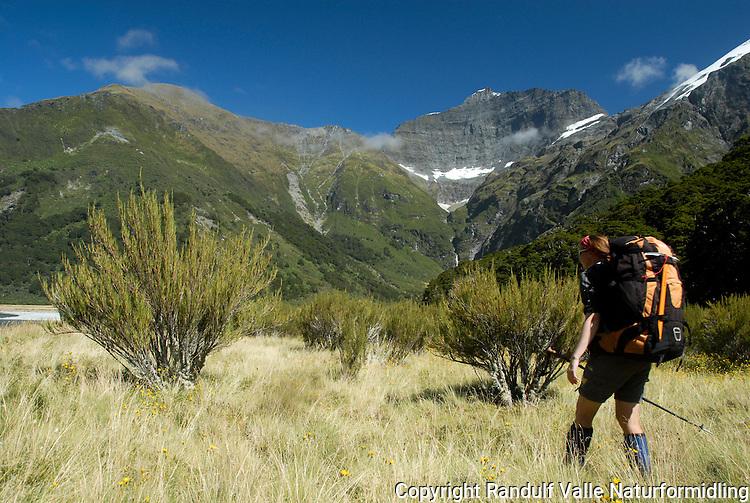 Dame går over grasslette i Mt Aspiring nasjonalpark, New Zealand. ---- Woman hiking along plain in Mt. Aspiring National Park, New Zealand.