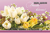 Maira, FLOWERS, BLUMEN, FLORES, photos+++++,LLPPA15165,#F#