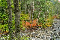 Denny Creek in the Mt. Baker - Snoqualmie National Forest