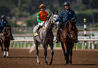 ARCADIA, CA - FEBRUARY 10: Unique Bella and Mike Smith at Santa Anita Park on February 10, 2018 in Arcadia, California. (Photo by Alex Evers/Eclipse Sportswire/Getty Images)