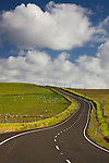 Road winding north through grazing pastures parallel to Ninety-Mile-Beach; blue sky with cumulous clouds; North Island, New Zealand