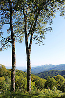 Stock photo: Two trees stand in great smoky mountain national park of Tennessee overlooking beautiful peaks and landscape.