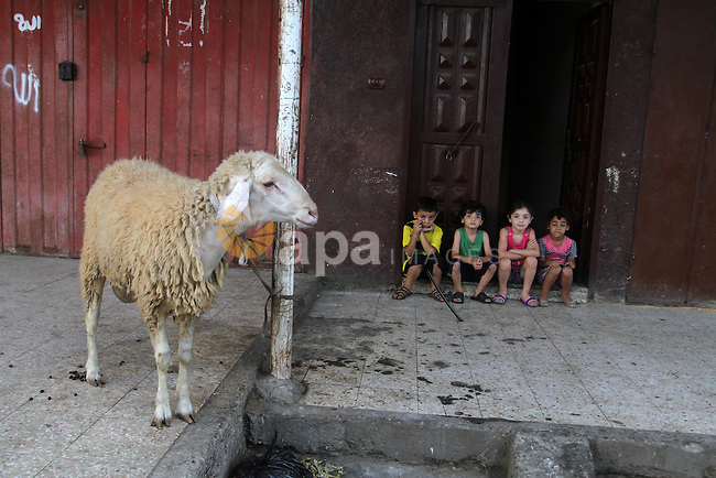 Palestinian Muslims sacrifice animals on the first day of of Eid al-Adha or the feast of sacrifice, in Rafah in the southern Gaza Strip on September 12, 2016. Muslims across the world are celebrating the annual festival of Eid al-Adha, or the Festival of Sacrifice, which marks the end of the Hajj pilgrimage to Mecca and in commemoration of Prophet Abraham's readiness to sacrifice his son to show obedience to God. Photo by Abed Rahim Khatib