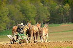 Nippenose Valley. Amishman plowing in Spring with 4 mule team. Route 654.