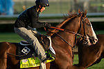 LOUISVILLE, KY - MAY 1: Free Drop Billy, trained by Dale Romans, exercises in preparation for the Kentucky Derby at Churchill Downs on May 1, 2018 in Louisville, Kentucky. (Photo by Eric Patterson/Eclipse Sportswire/Getty Images)