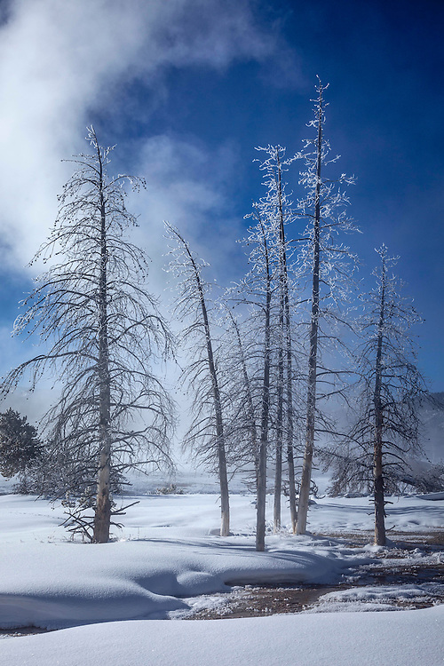Warm, moist steam rises from geothermal features only to coat nearby trees in bore frost splendor