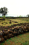Hawaii: Oahu, largest heiau, Pu'uomahuka, north shore. Photo:hiinsi102.Photo copyright Lee Foster, 510/549-2202, lee@fostertravel.com, www.fostertravel.com