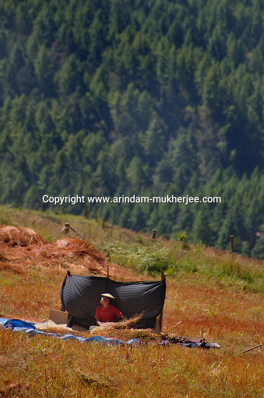 A bhutanese man at work on a farm land at Bumthang, Bhutan. Arindam Mukherjee.