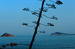 Italie. Italia. Sardaigne. Sardinia.Vue depuis Santa Maria Navarese sur la côte sauvage du golfo di Orosei  (est de la sardaigne)