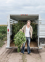 Jared Stanley (cq) at the Stanley Brother's farm near Wray, Colorado, Monday, September 22, 2014. The Stanley Brothers have developed a popular strain of marijuana that has been found to be helpful in reducing seizures. The marijuana high in CBDs and low in THC, the chemical which gets a person stoned.<br /> <br /> Photo by Matt Nager