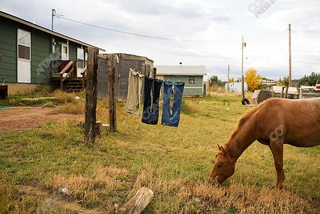 Horses roam free through the town of Lame Deer, Montana which is on the Northern Cheyenne Indian Reservation.
