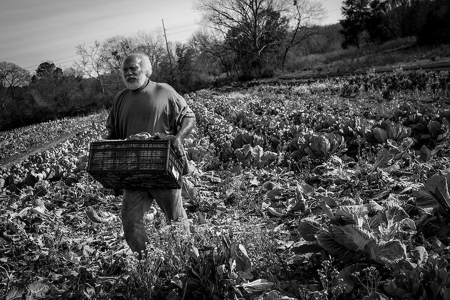 Farming is still a major occupation on St. Helena Island. Although much of the land has been taken over by large corporate operations, most Gullah maintain substantial farms on their property growing produce for their own use and as an income stream.