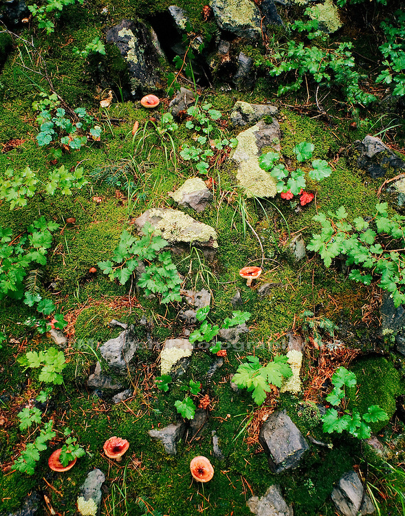 Forest floor, Chiricahua Wilderness