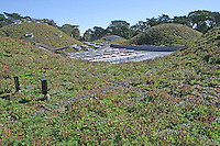 The Living Roof, new California Academy of Sciences, San Francisco California