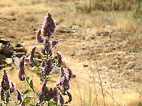 Purple flowers overlooking dry field