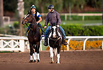 OCT 24: Breeders' Cup Dirt Classic entrant Yoshida is ponied by assistant trainer Riley Mott at Santa Anita Park in Arcadia, California on Oct 24, 2019. Evers/Eclipse Sportswire/Breeders' Cup